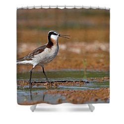 Wilson's Phalarope Calling Shower Curtain