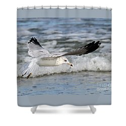 Wind Beneath My Wings Shower Curtain by Geoff Crego