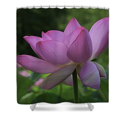 Shower Curtain featuring the photograph Wind Blown by Cindy Lark Hartman