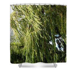 Wind In The Willow Shower Curtain by Kathy Bassett