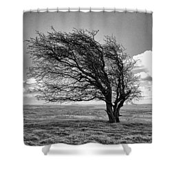 Windswept Tree On Knapp Hill Shower Curtain