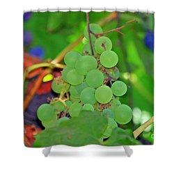 Wine Beginnings Shower Curtain