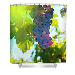 Wine Grapes  Shower Curtain