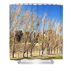 Shower Curtain featuring the photograph Winery by Yew Kwang