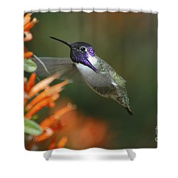Shower Curtain featuring the photograph Winged Jewelry by Wilma  Birdwell