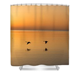 Shower Curtain featuring the photograph Wings At Sunrise by Georgia Mizuleva