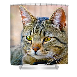 Winston 8 Shower Curtain