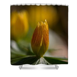 Winter Aconite Shower Curtain by Andreas Levi