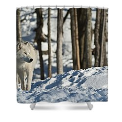 Shower Curtain featuring the photograph Winter Arctic Wolf by Wolves Only