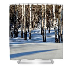 Shower Curtain featuring the photograph Winter Aspens by Jack Bell