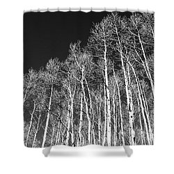Shower Curtain featuring the photograph Winter Aspens by Roselynne Broussard