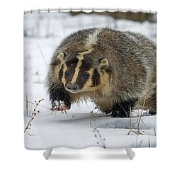 Shower Curtain featuring the photograph Winter Badger by Jack Bell