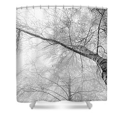 Winter Birch - Bw Shower Curtain by Hannes Cmarits