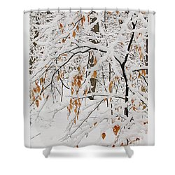 Winter Branches Shower Curtain by Ann Horn