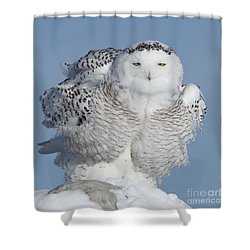 Winter Coat Shower Curtain by Heather King