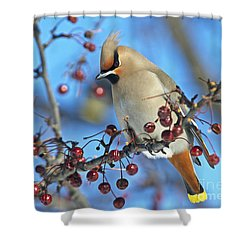 Winter Colors.. Shower Curtain by Nina Stavlund