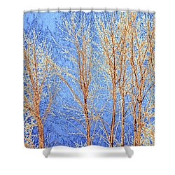 Winter Cottonwoods Abstract Shower Curtain by Will Borden