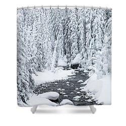 Winter Creek Shower Curtain