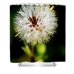Shower Curtain featuring the photograph Winter Dandelion by Pedro Cardona