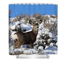 Winter Doe Shower Curtain