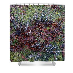 Winter Frost Peace Nature Denmark Shower Curtain by Colette V Hera  Guggenheim