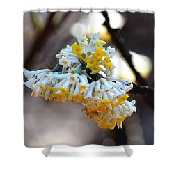 Winter Gold Shower Curtain by Maria Urso