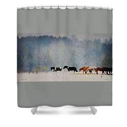 Shower Curtain featuring the photograph Winter Horses by Ann Lauwers