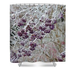 Shower Curtain featuring the photograph Winter In Lila by Felicia Tica