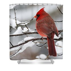 Winter In Red Shower Curtain