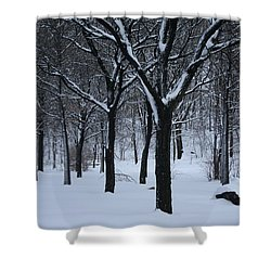 Shower Curtain featuring the photograph Winter In The Park by Dora Sofia Caputo Photographic Art and Design