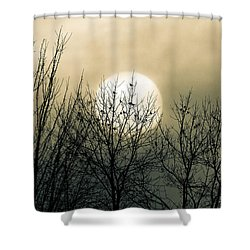Winter Into Spring Shower Curtain