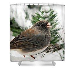 Winter Junco Shower Curtain by Christina Rollo