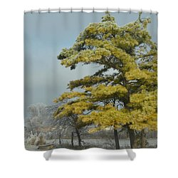 Winter Landscape Shower Curtain by Debra Martz