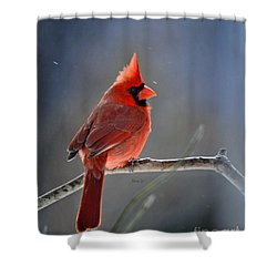 Winter Morning Cardinal Shower Curtain