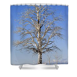 Winter Shower Curtain by Muhie Kanawati