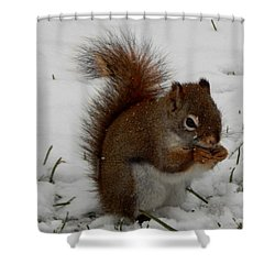 Shower Curtain featuring the photograph Winter Picnic by Betty-Anne McDonald