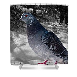 Shower Curtain featuring the photograph Winter Pigeon by Nina Silver