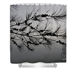 Shower Curtain featuring the photograph Winter Pine Branch by Bev Conover