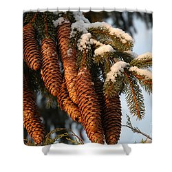 Winter Pine - Holiday  Shower Curtain