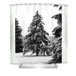 Winter Pines Shower Curtain by Ann Horn
