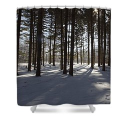 Winter Pines Shower Curtain
