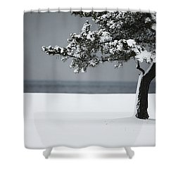Winter Quiet Shower Curtain by Karol Livote