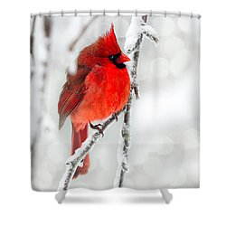 Shower Curtain featuring the photograph Winter Red by Jaki Miller