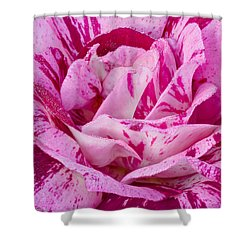 Shower Curtain featuring the photograph Winter Rose  by Heidi Smith