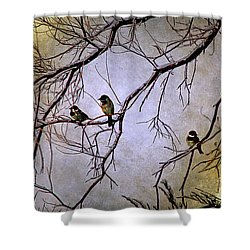 Winter Sparrow Dawn Shower Curtain by Barbara Chichester