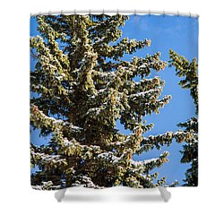 Winter Tale - Featured 3 Shower Curtain by Alexander Senin