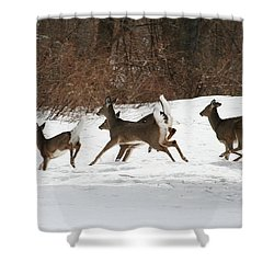 White Tailed Deer Winter Travel Shower Curtain