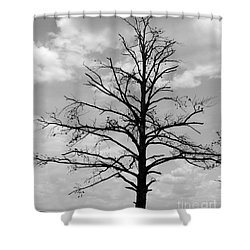 Shower Curtain featuring the photograph Winter Tree by Andrea Anderegg