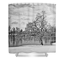 Winter Tree At The Park  B/w Shower Curtain