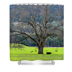 Winter Tree With Cows By The Umpqua River Shower Curtain